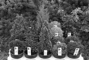 vivero plantas galiciaBIN 300x202