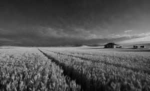 Sector agroalimentari a Australia bin ITC 300x183
